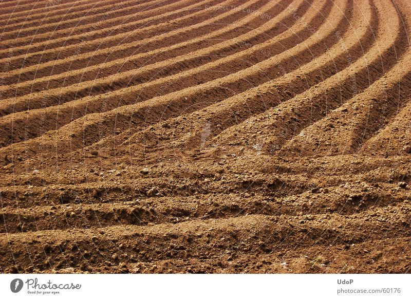 Line Brown Field Illustration Furrow Curved