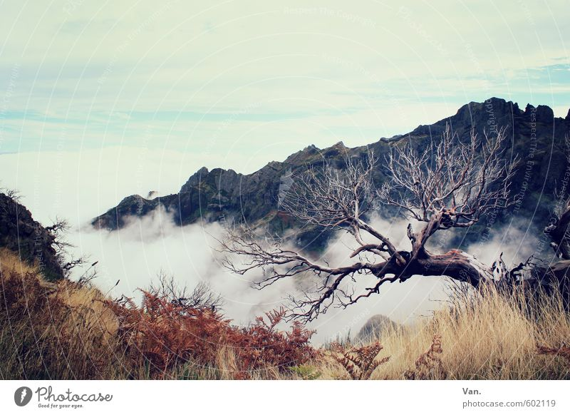 Sky Nature Vacation & Travel Old Plant Tree Clouds Mountain Autumn Grass Rock Bushes Hiking Illness Madeira