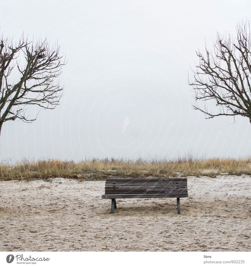 Sky Vacation & Travel Tree Ocean Relaxation Loneliness Calm Clouds Winter Beach Sand Brown Contentment Tourism Beginning Bench