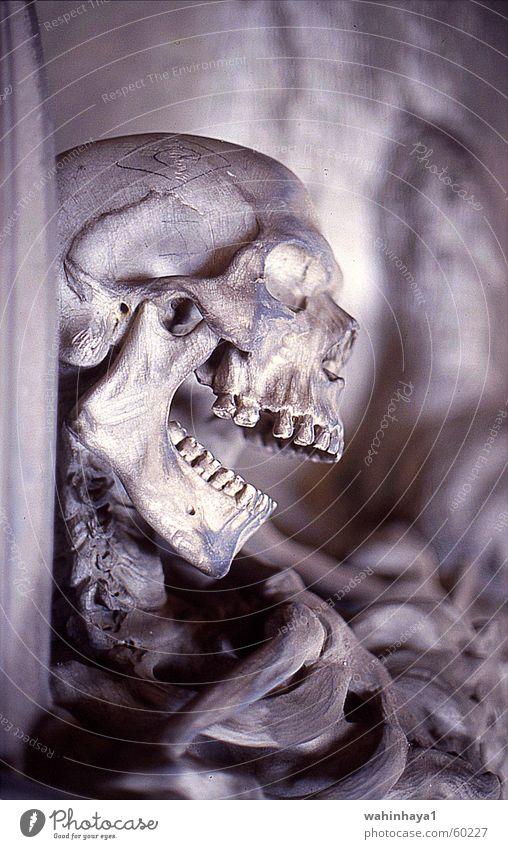 Italy Cemetery Skeleton Grave Death's head Liguria Genua Ledger Staglieno