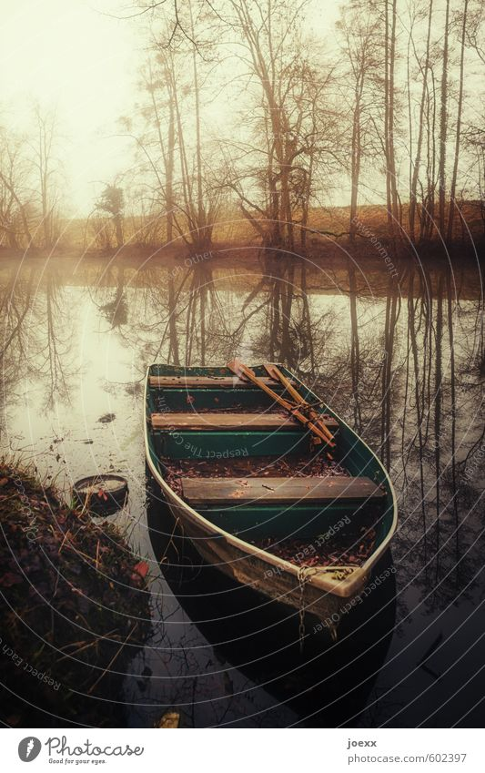 quiet flow Nature Water Autumn Weather Fog Tree River bank Rowboat Motor barge Old Brown Yellow Green Romance Calm Identity Idyll Rhine Old Rhine Colour photo