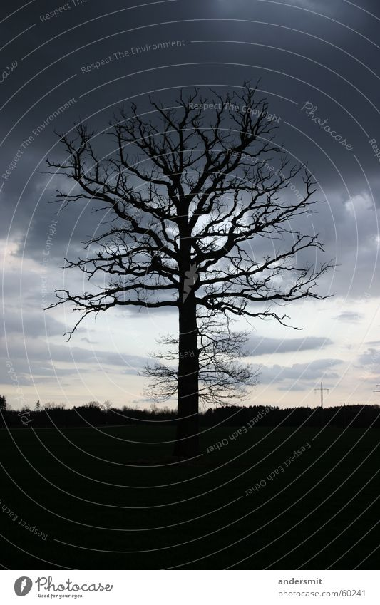 wood bolt Tree Large Bizarre Loneliness Silhouette Clouds Storm Night Forest Thin Shadow Evening Dusk Sadness
