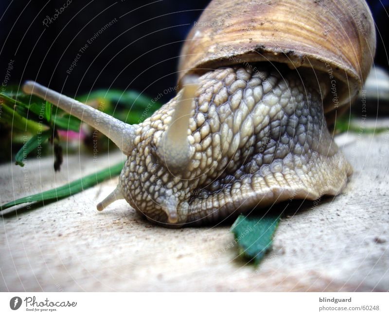 Nature Green Eyes Garden Gray Grass Movement Brown Snail Crawl Feeler Slowly Mucus Vineyard snail Gain favor