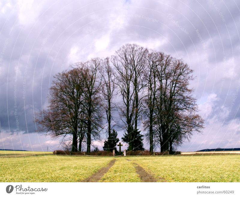 Sky Tree Black Clouds Dark Autumn Back Hope Grief Monument Thunder and lightning Damp Memory Eternity Tears Grave