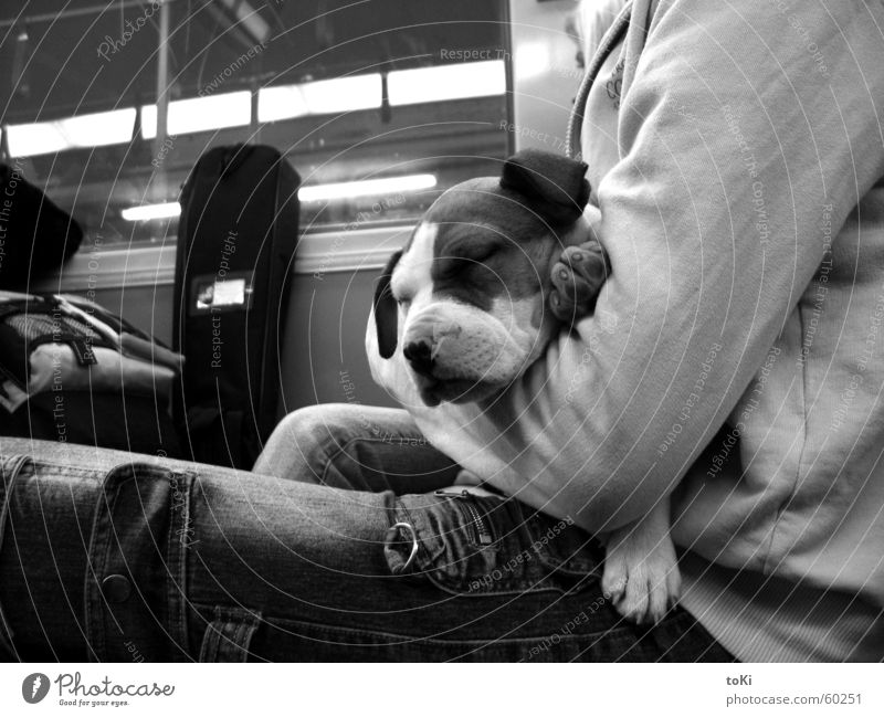 Dream Dog Germany Sleep Safety Underground Patch Paw Mammal Cuddling Tram Guatemala Daydream Germania Catedral Metropolitana