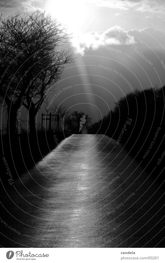 come into the light... Tree Sunbeam Dark Clouds Black White Sunset Lanes & trails Black & white photo Street Nature