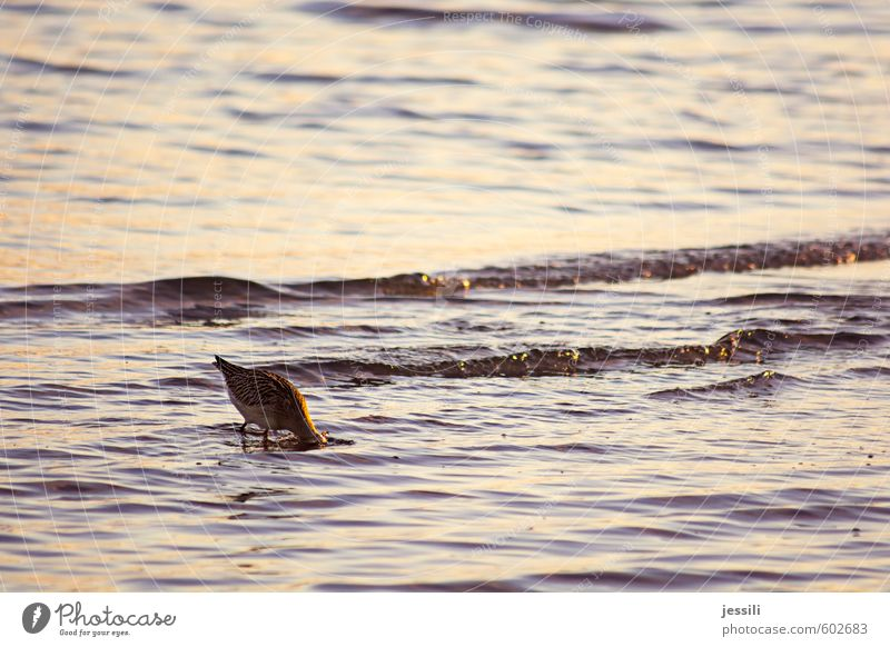 Water Animal Autumn Coast Think Eating Bird Waves Wild animal Observe Study Hope Curiosity Search Dive Appetite