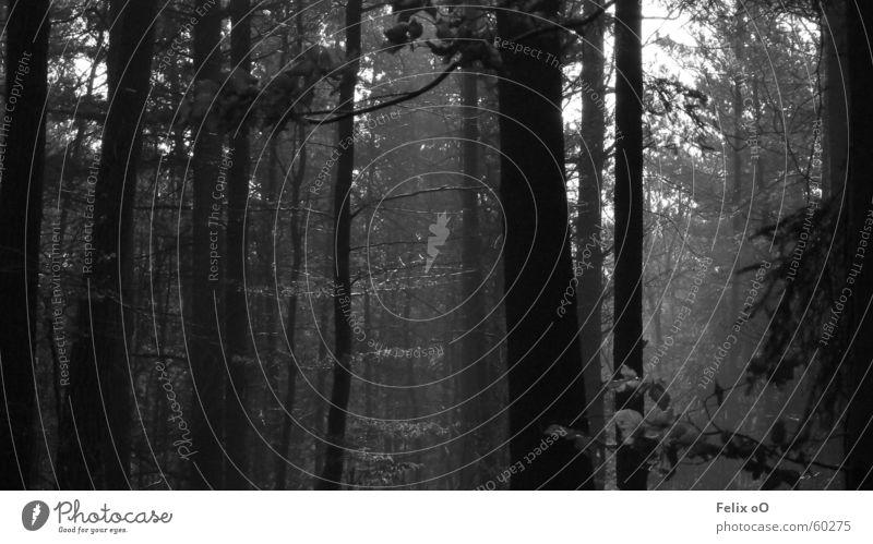 Walk No.1 Forest Fog Palatinate forest Black & white photo Morning
