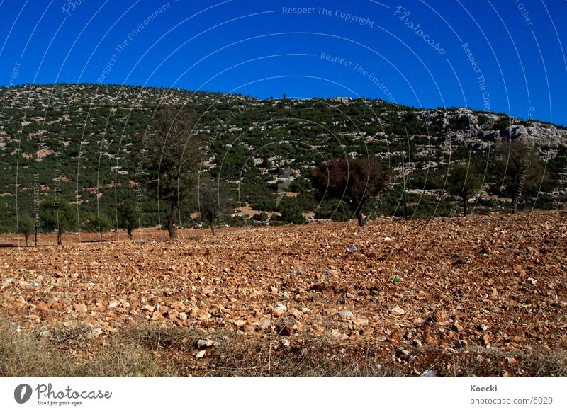 Turkish wasteland Turkey Tree Field Blue Stony Stone Sky