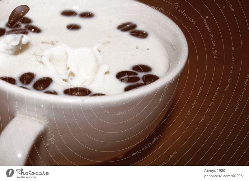 White Brown Drops of water Coffee Break Café Cup Wooden board Milk Stagnating Beans Coffee bean Short exposure