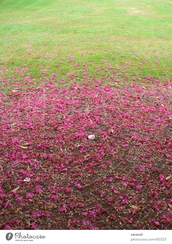 Flower Green Blossom Pink Lawn