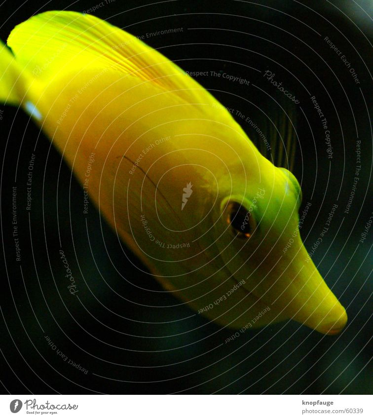 Vacation & Travel Ocean Black Eyes Yellow Fish Zoo Aquarium Water wings