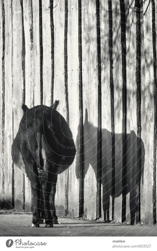 pars pro toto Wall (barrier) Wall (building) Animal Pet 1 Stand Wait Black White Donkey Bottom Shadow Sadness Grief Loneliness Black & white photo Exterior shot