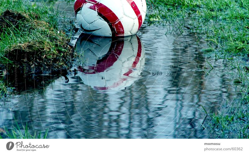 ...fallen into the water Grass Reflection Ball Water Water reflection Puddle Sludgy Foot ball 1 Deserted Exterior shot Colour photo Wet