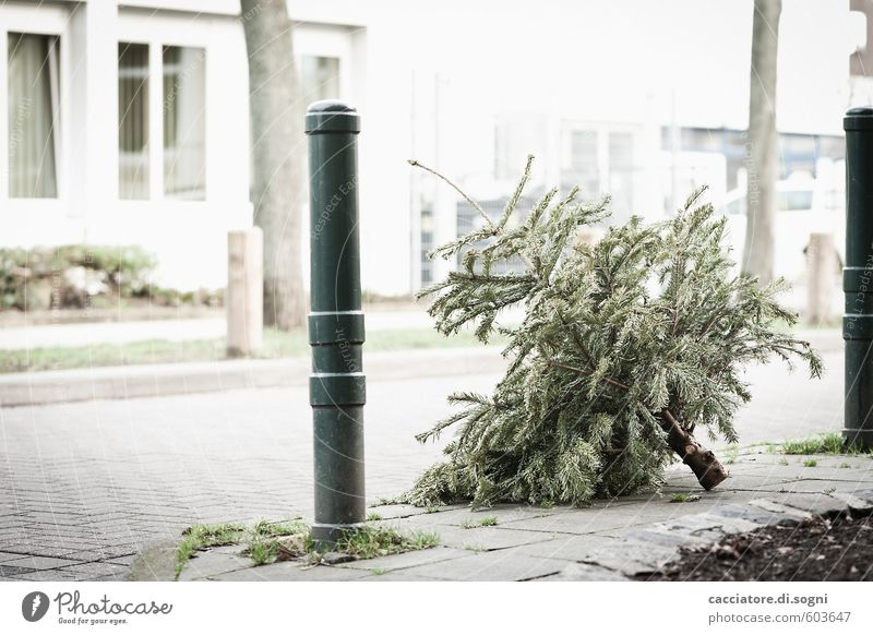 over Winter Tree Christmas tree Building Street Pole Simple Bright Gloomy Gray Green White Disappointment Loneliness Distress Squander End Apocalyptic sentiment