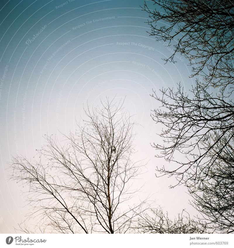 Sky Nature Blue Tree Leaf Calm Winter Forest Cold Environment Sadness Emotions Autumn Senior citizen Religion and faith Death