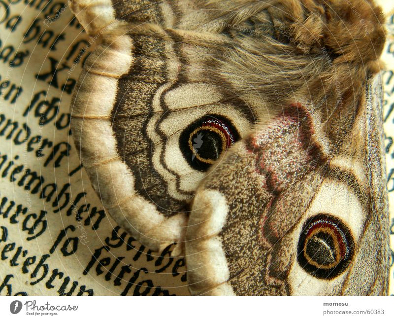 detail Giant peacock moth Butterfly Book Letters (alphabet) Reading Erudite Detail Characters Old
