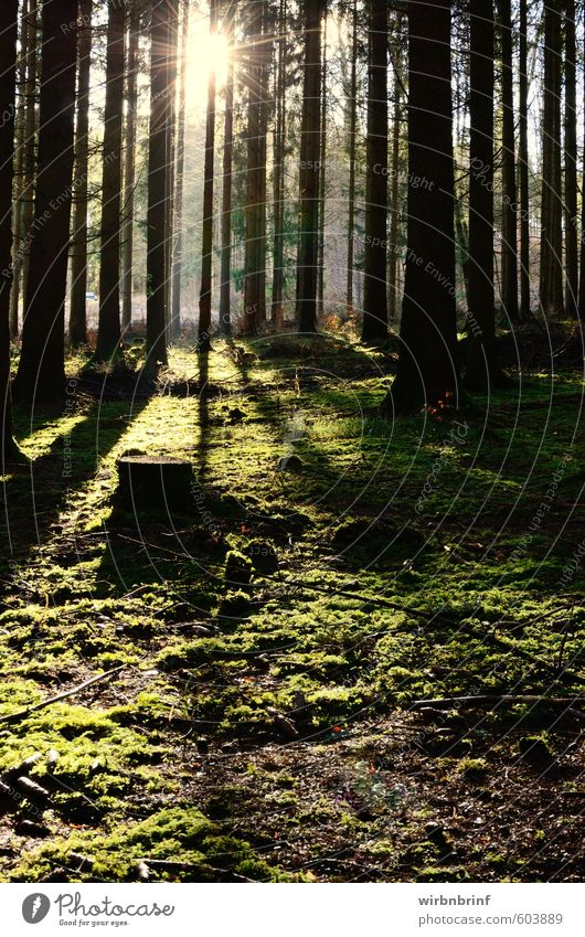 Light and shadow.......................................... Environment Nature Sun Winter Beautiful weather Plant Tree Grass Moss Foliage plant Forest Deserted