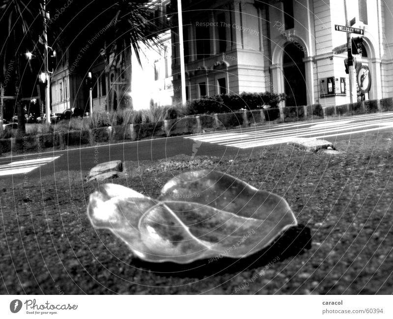 A leaf by the wayside Leaf Sidewalk Light Black White Transport Traffic light Town Auckland curb street traffic