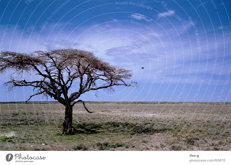 Sky Tree Clouds Far-off places Bird Horizon Level Africa Desert Flat Steppe Namibia Savannah