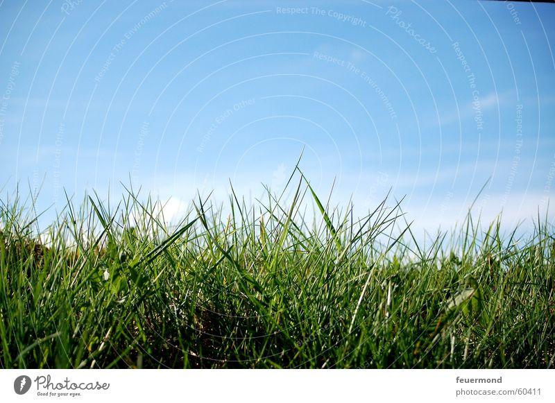 Sky Blue Green Sun Summer Clouds Meadow Grass Spring Jump Field Growth Beautiful weather Lawn