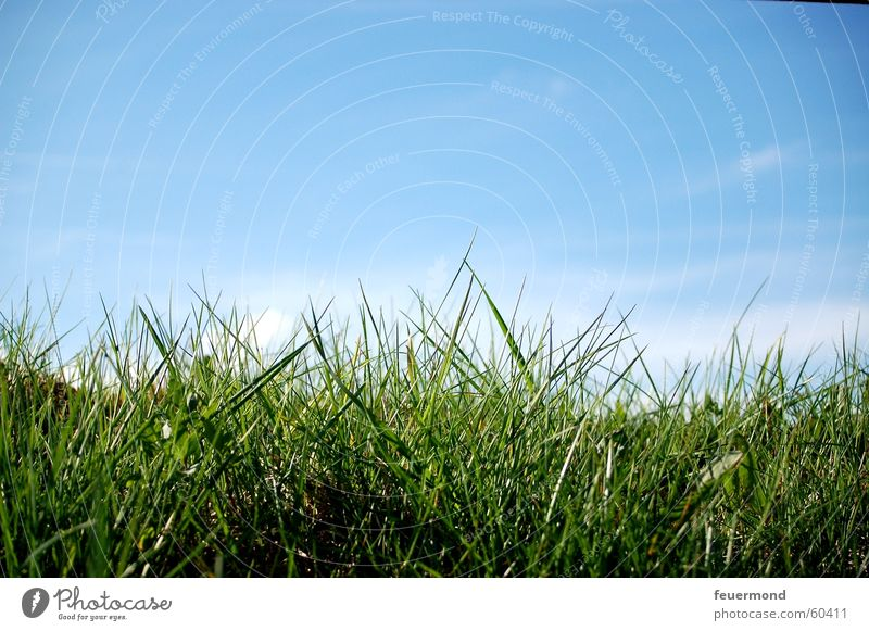Sky Blue Green Sun Summer Clouds Meadow Grass Spring Jump Field Growth Beautiful weather Lawn