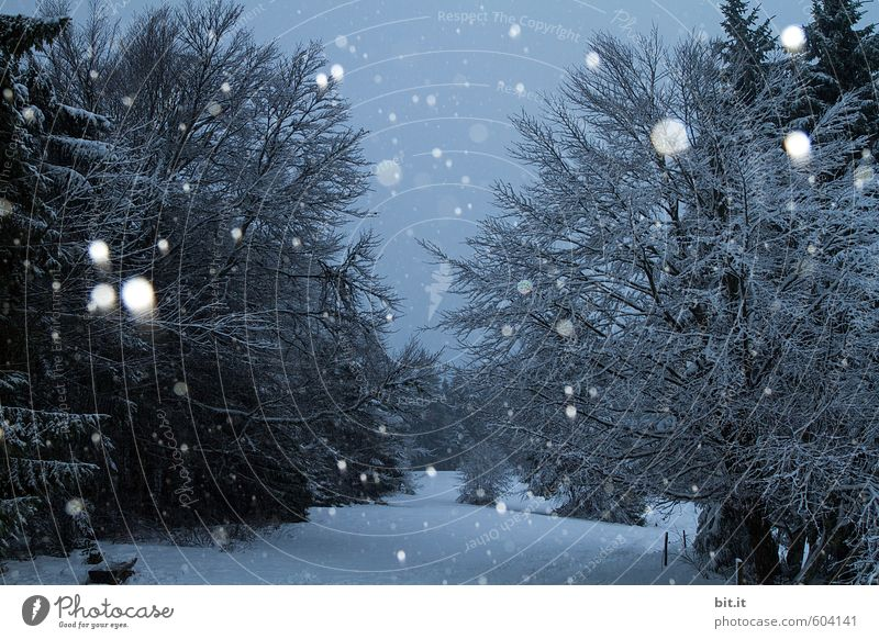 Sky Nature Vacation & Travel Blue White Tree Landscape Winter Forest Black Cold Environment Snow Snowfall Tourism Ice
