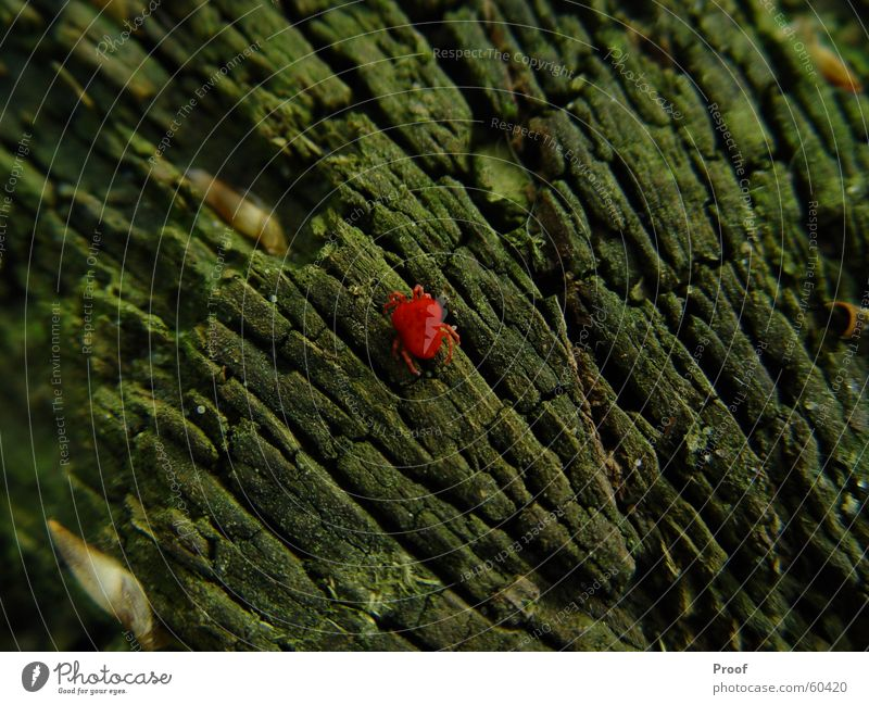The mite Mite Spider Tree Tree bark Animal Red Green Insect Nature Contrast Colour
