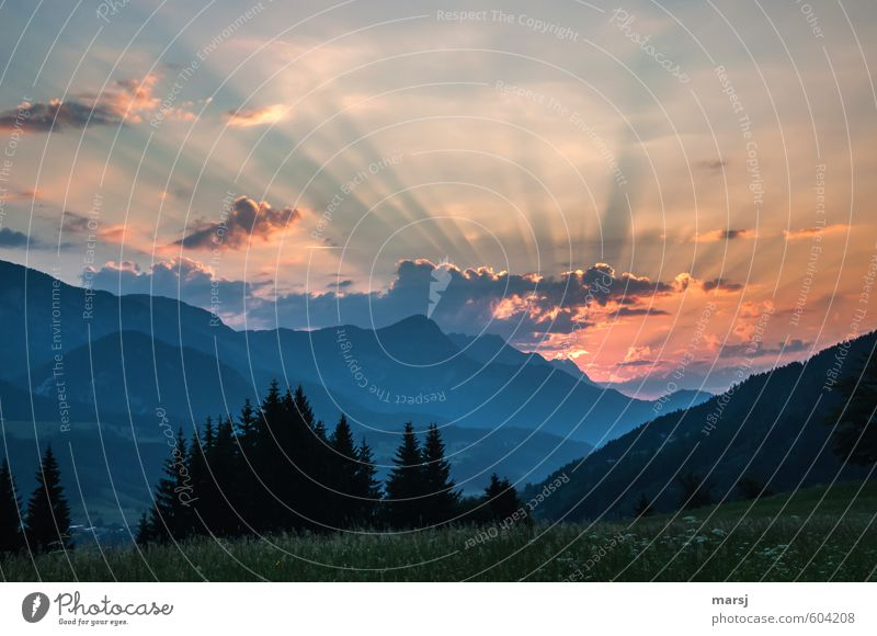 It's best in the morning Environment Nature Landscape Plant Sky Clouds Horizon Sunrise Sunset Sunlight Spring Summer Beautiful weather Meadow Forest Hill Alps