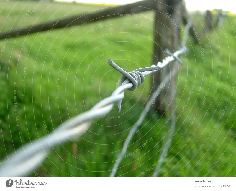barbed wire Green Barbed wire Fence Meadow Wood Grass no cows