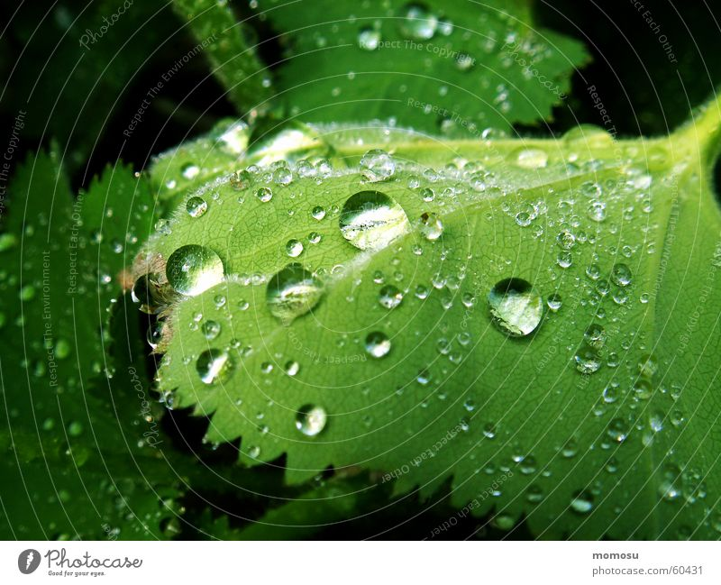 Summer Leaf Spring Garden Rain Drops of water Rope