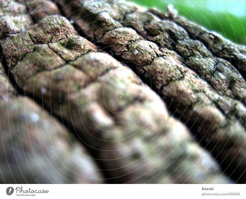 Nature Tree Plant Death Garden Park Environment Dry Tree trunk Tree bark Dried Foliage plant