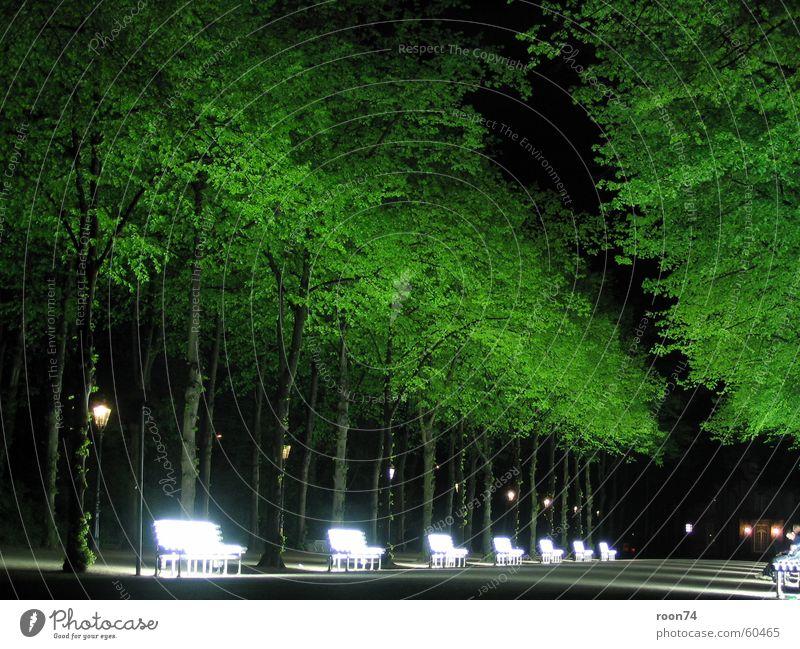 Nature Tree Green Duesseldorf Neon light Hofgarten Neon bank