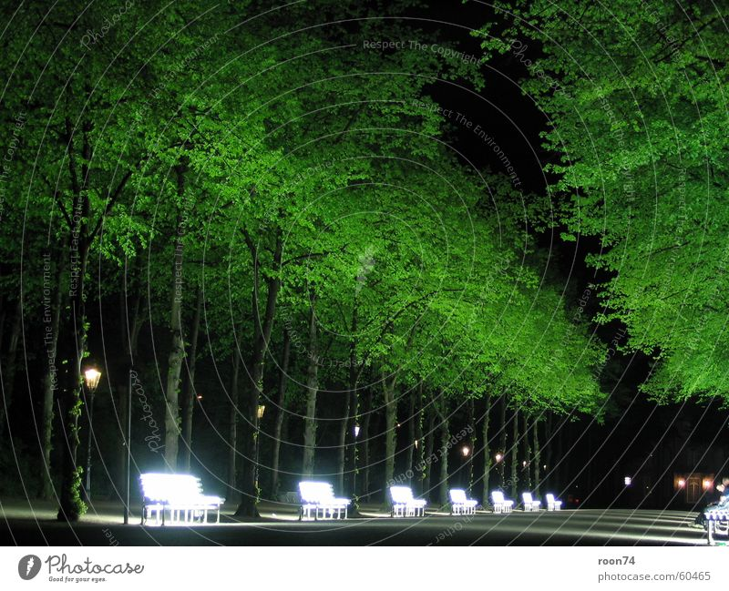 Nature Tree Green Duesseldorf Neon light Hofgarten Neon bank