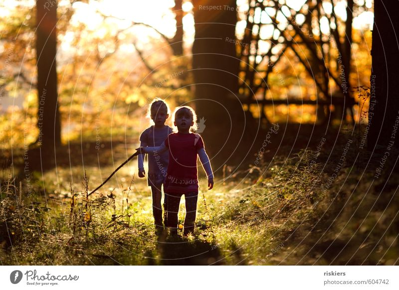 Human being Child Nature Girl Forest Environment Feminine Autumn Playing Happy Natural Together Contentment Infancy Illuminate Authentic