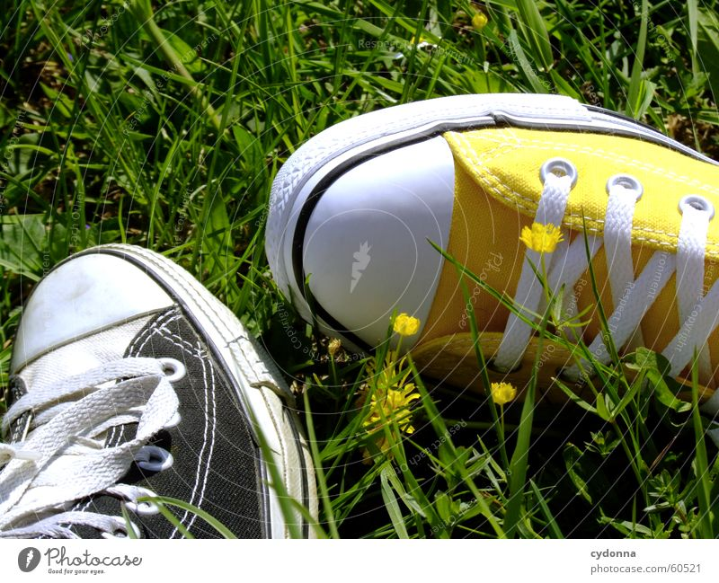 Sun Flower Meadow Jump Style Blossom Grass Spring Footwear Clothing Sneakers Chucks Nature Environment Iconic Shoelace