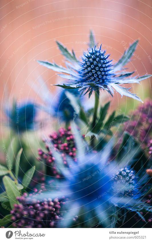 . Nature Plant Flower Leaf Blossom Bouquet Exotic Natural Wild Blue Multicoloured Colour Thistle Pink Blur Flower arrangement Leaf green Colour photo