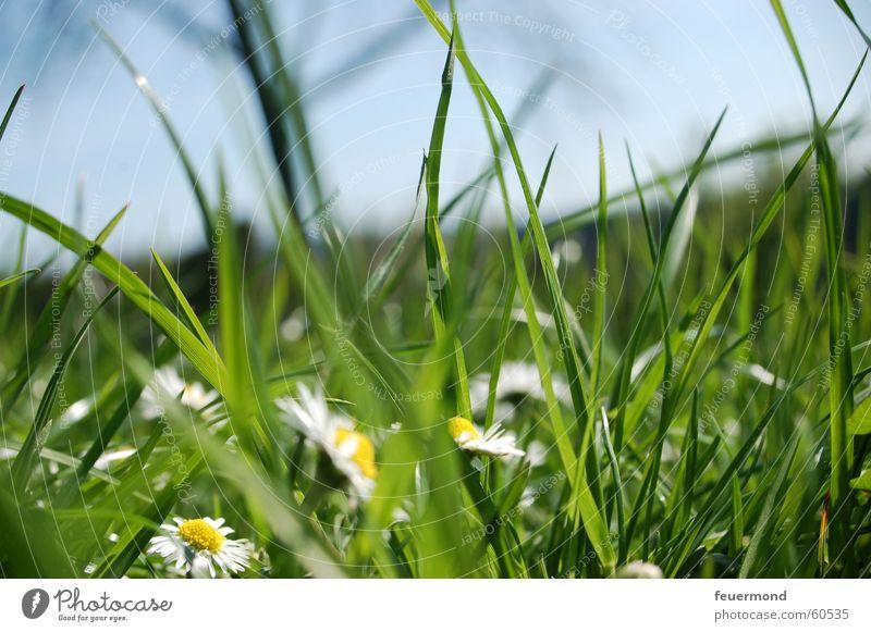 Nature Green Sun Summer Flower Meadow Grass Spring Jump Field Idyll Beautiful weather Blade of grass Daisy Flower meadow Pollen