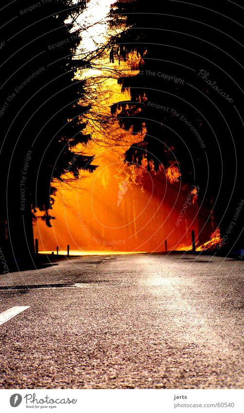 Way into the light Sunbeam Forest Light Sunset Beautiful Traffic infrastructure Celestial bodies and the universe Lanes & trails Street jarts