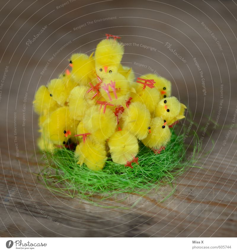 Cuddle group | Bird's-eye view Decoration Easter Group of children Spring Animal Group of animals Baby animal Animal family Lie Cuddly Small Cute Many Yellow