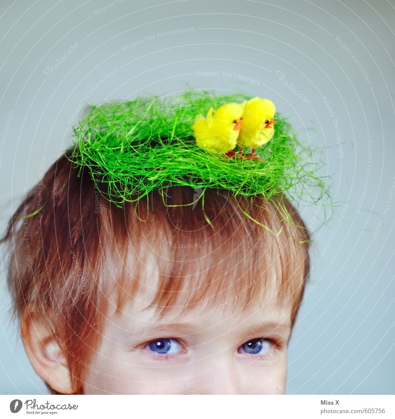 Human being Child Baby animal Funny Hair and hairstyles Head Bird Blonde Infancy Decoration Crazy Cute Group of animals Easter Toddler Nest