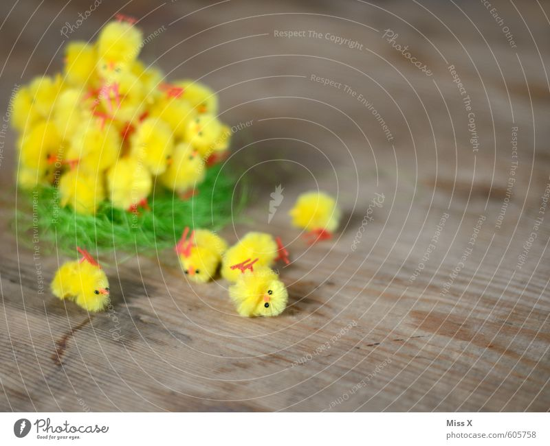 fallen down Decoration Easter Animal Bird Group of animals Baby animal Funny Cute Yellow Easter egg nest Easter chick Chick Nest To fall Heap Many Colour photo