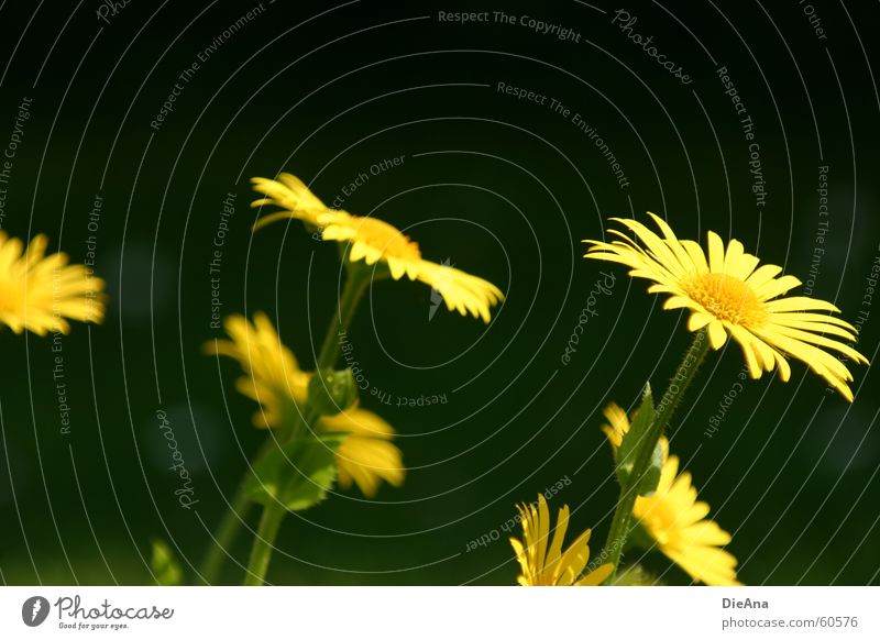 Flower Green Plant Yellow Meadow Jump Spring Garden Lawn May