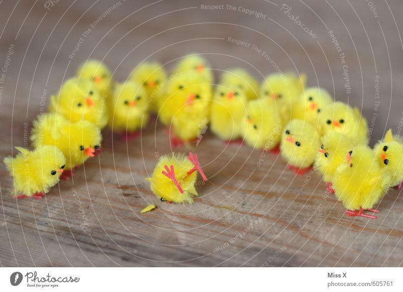 Yellow Emotions Funny Death Moody Bird Lie Fear Decoration Group of animals Curiosity Easter Grief Illness Intoxicant Crowd of people