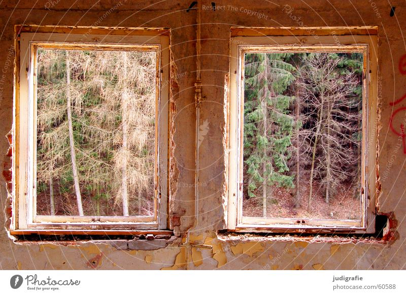 Old Green House (Residential Structure) Forest Wall (building) Window Wall (barrier) Building 2 Room Vantage point Hotel Decline Plaster Dismantling Harz