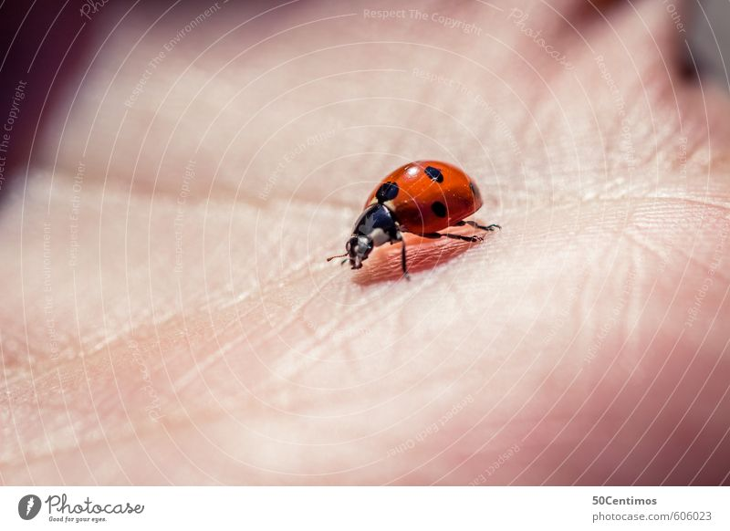 Ladybird in the hand Skin Hand Zoo Animal Wild animal Small Red Colour photo Close-up Detail Macro (Extreme close-up)