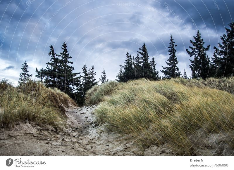 dune Sky Clouds Storm clouds Tree Grass Forest Coast Blue Yellow Black Colour photo Deserted Copy Space top Evening Twilight Deep depth of field