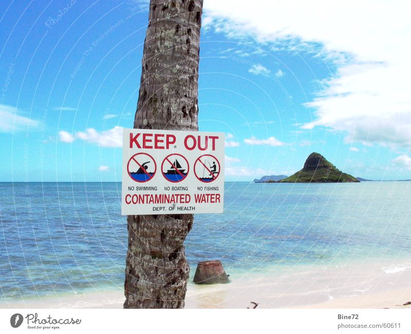 bathing forbidden.... Leisure and hobbies Vacation & Travel Beach Ocean Clouds Palm tree Bans Abstain Hawaii Oahu Idyllic beach Polluted Turquoise Bacterium USA