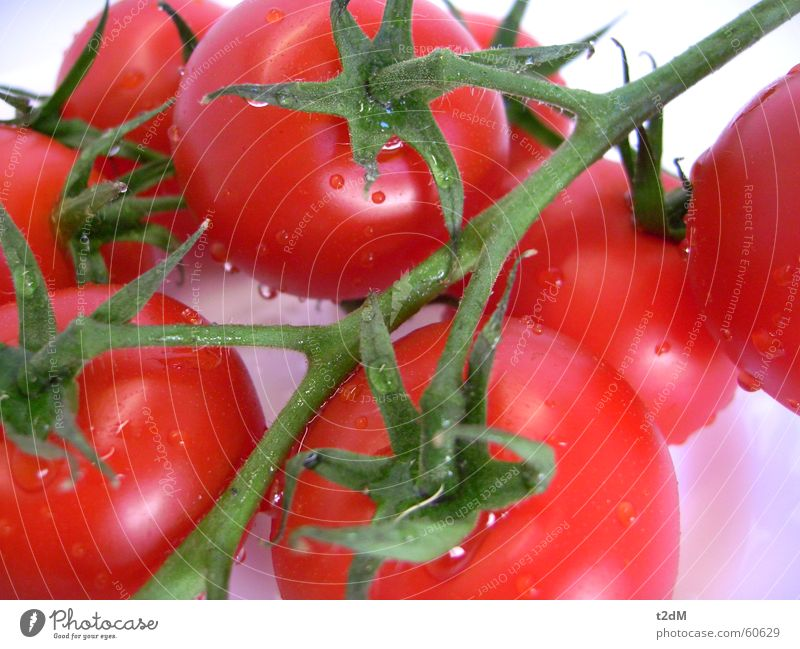 Plant Red Summer Healthy Vegetable Delicious Damp Tomato Juicy Sauce