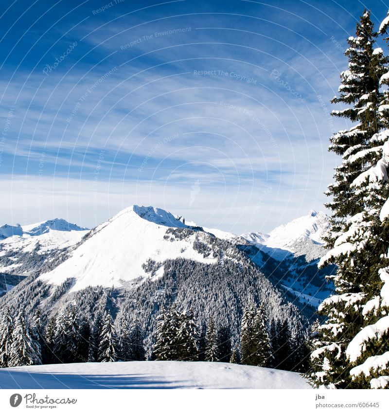 Sky Nature Blue White Relaxation Landscape Calm Winter Black Forest Mountain Snow Freedom Air Beautiful weather Trip